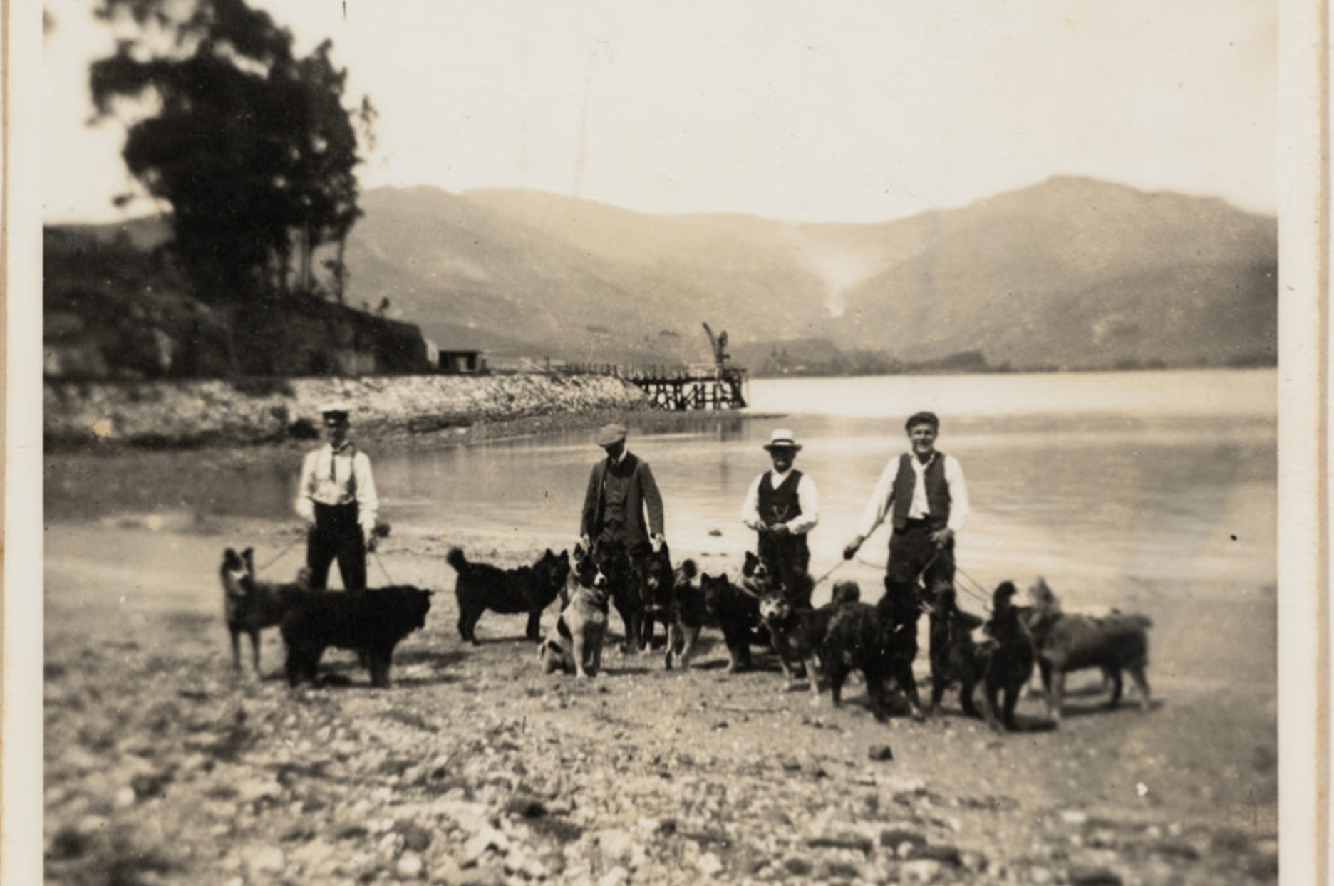 11670 1 Approx. 13 dogs and four men on Quail Island in 1911, training for Antarctic Expedition